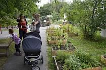 Komunitní zahrada slouží nejenom k zahradničení, ale také jako místo k setkávání. V pražské zahradě Vidimova mají kolem třiceti členů a plánují se do příští sezony rozrůst.