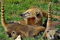 Vlčata, tygři, nosálové a další zvířata byla během léta miláčky davů.
