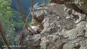 Pomocí kamery umístěné v umělém skalním hnízdě mohou ochránci supy sledovat v přímém přenosu.