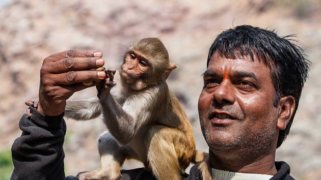 Chrám Galta, poutní místo indických hinduistů, je proslavený výskytem makaků.