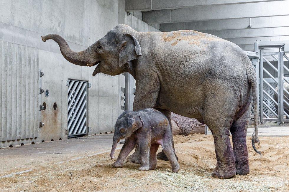 Janita se hned v prvních hodinách začala navzdory své nezkušenosti osvědčovat jako dobrá matka.