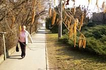 Začala pylová sezóna. Období, na něž se s předstihem připravují tisíce pražských alergiků./Ilustrační foto