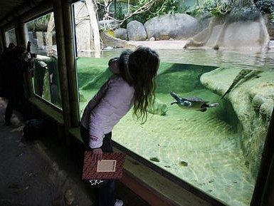VELKÁ PREMIÉRA je ještě čeká, návštěvníci si ale gaviály mohli prohlédnout už nyní.