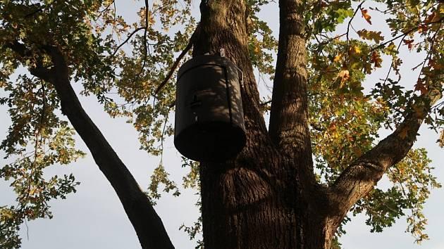 Budky pro netopýry.