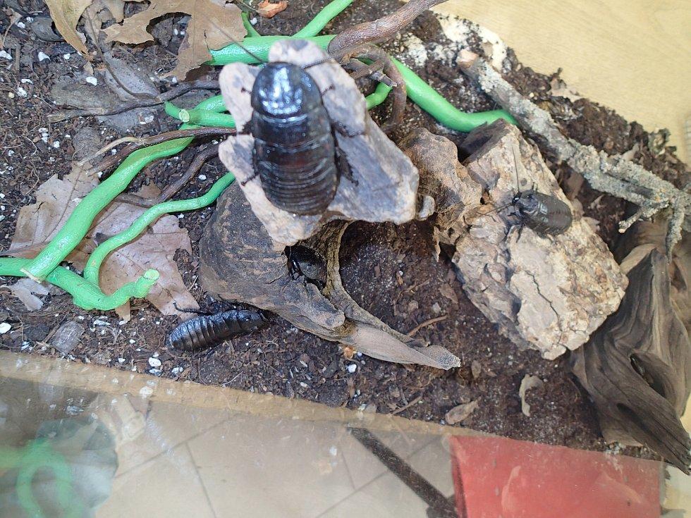 Nalezení švábi