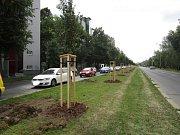 Výsadba dřevin v ulici Patočkova.