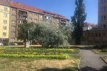 Praha 3 v souvislosti s revitalizací parku před ZŠ Jeseniova uspořádala anketu mezi místními občany.