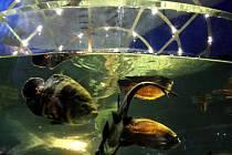 DALŠÍ KOUSEK MOŘE. Mořský svět na holešovickém Výstavišti představil nové průhledové akvárium.