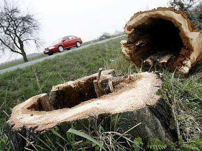 Kácení. Nemocné stromy už nebudou ohrožovat dopravu a chodce na silnici z Jesenice do Benešova.