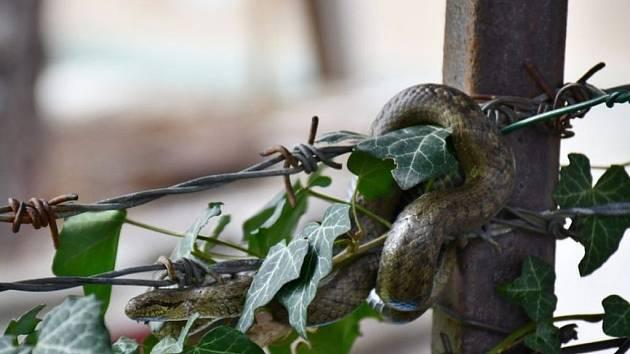 Obyvatele Hlubočep vyděsil had na plotě.