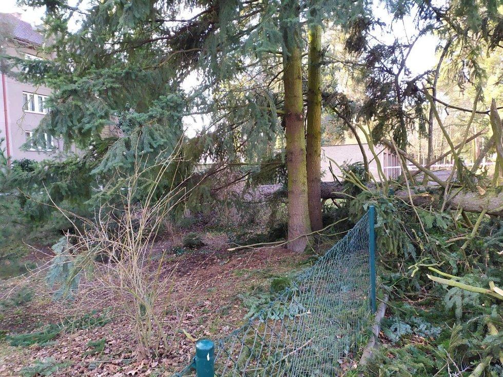 Spadlý strom v Klánovicích zranil dvě děti.