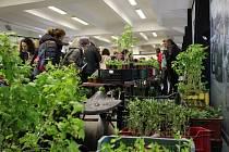 Na bylinkovém dni si můžete nakoupit bylinky či se dozvědět zajímavé informace