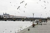 Náplavka na pravém břehu Vltavy v Praze.