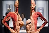 Výstava Body The Exhibition.