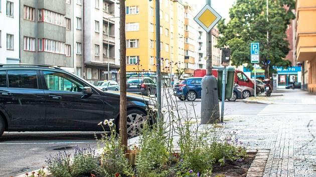 v Praze spontánně vznikají záhonky okolo stromů.