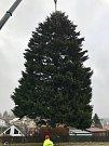 Kácení vánočního stromu pro Prahu v Rynolticích na Liberecku.