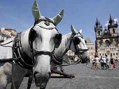 KOLIK JE STUPŇŮ? Koně musí na turisty čekat za každého počasí.