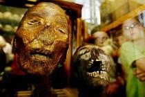 EXPONÁTY. Tyto si mohli návštěvníci prohlédnout v Hrdličkově muzeu člověka.