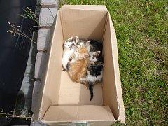 Nalezená koťata.