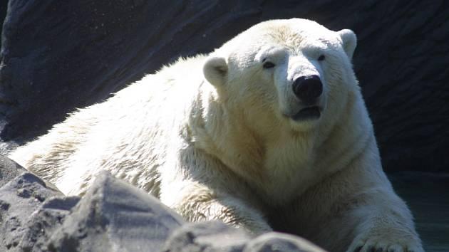 Medvědice Bora