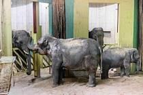 Donna a Sita se v novém domově již krátce po vyložení začaly seznamovat s mladými samci ve vedlejším boxu.