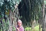 Houslový virtuóz Jaroslav Svěcený v Botanické zahradě v indonéském Bogoru.