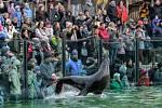 24. prosince se mohou návštěvníci Zoo Praha těšit například na vystoupení lachtanů zakončené speciální nadílkou.