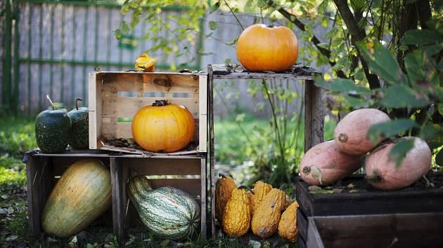 Botanická zahrada zahajuje Tajuplný dýňový podzim.