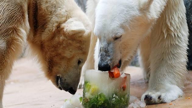 Speciální zmrzlina přijde medvědům v těchto dnech vhod.