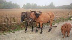 Spolek zachraňuje staré a nemocné koně i ovce