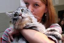 V Praze volili Miss kočku. Vyhrál Miky z Michle (na snímku se svojí majitelkou Martinou Štěpánovou).