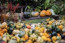 Botanická zahrada je stále otevřena veřejnosti, jen byly zrušeny všechny naplánované akce a doprovodný program.