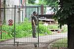 Bezprostřední okolí stadionu na Štvanici je neprodyšně uzavřeno. Pověření dělníci hlídají, aby nikdo nepronikl dovnitř