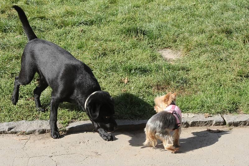 Venčení psů v pražských parcích.