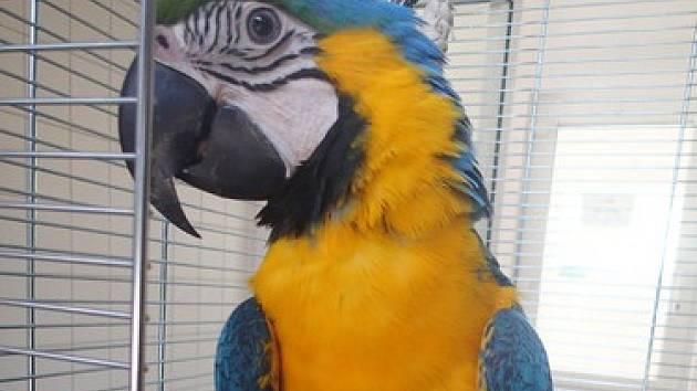 Nalezený papoušek.
