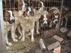 Zanedbaní psi se zotavují v útulku městské policie