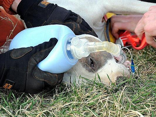 Hasiči zachraňovali psa, který spadl ze skály.