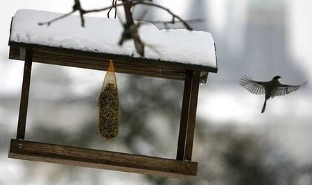 V mrazivých zimních dnech trpí především drobné ptactvo, které by bez přikrmování nepřežilo. Krmítko umístěné na jednom ze stromů pod Strahovským klášterem hojně navštěvují převážně drobné sýkorky.