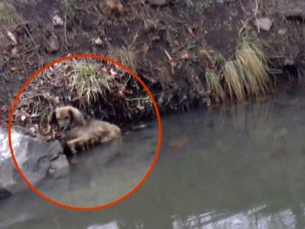 Odchyt psa z ledové vody v lesoparku Stromovka v Praze 7.