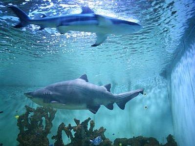 V IMAXU budete mít díky 3D projekci pocit, že na vás žralok každou chvíli zaútočí.