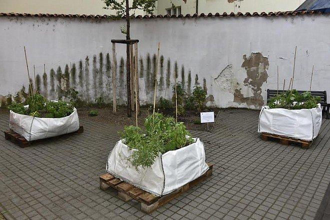 ZA HAŠTALEM. Na komunitní zahradě u dětského hřiště Za Haštalem místní loni pěstovali rajčata a bylinky.