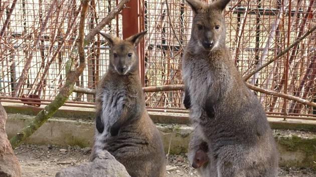 """V centru Prahy se ukrývá """"mini zoo"""" s exotickými zvířaty a rostlinami"""