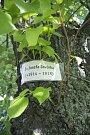 Stromy republiky - Chodov. Skupina stromů byla zasazena v roce 1918 okolo pomníku padlým v I. světové válce na Chodově. Dnes některé stromy chybí a zbylo jich jen pět.