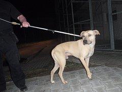 Agresivního psa páníček uvázal u útulku pro kočky