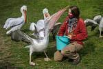 Zoo Praha může za podmínek znovu otevřít areál pro návštěvníky.