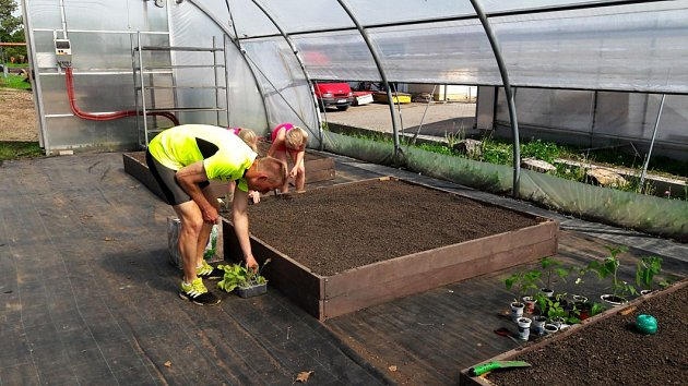 Domácí rajčata si můžete vypěstovat, i když nemáte zahradu