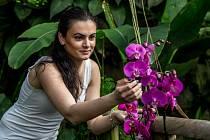 Z výstavy 'Orchideje - královny opylovacích triků' ve skleníku Fata Morgana v Botanické zahradě v Praze.