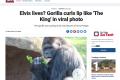 Fotografie gorilího samce Richarda ovládla internet i světová média.