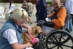 Poslední šťastné dny které mohou lidé v hospici Dobrého pastýře prožít, se jim personál zpříjemnit co nejvíce.