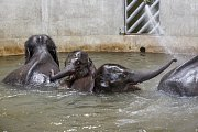 Slůňata Max a Rudi si užívají koupel se sprško